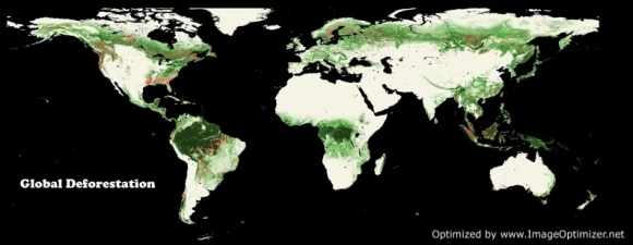 Areas of Forest Cover Loss during just a five year period 2005 to 2010. The background image is the forest cover in the year 2000. NASA
