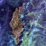 phytoplanten Gotlan Island Baltic Sea Sweden